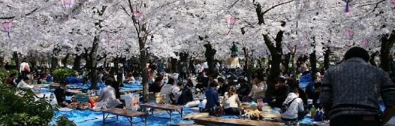 上野や隅田公園に花見をする人が殺到か 同僚9人で飲み会していた30代男性「自粛や我慢ばかりもう限界」@はちま起稿